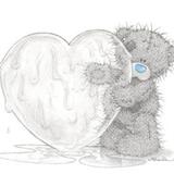 Teddy (11)