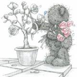 Teddy (165)