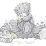Teddy (20)