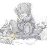 Teddy (35)
