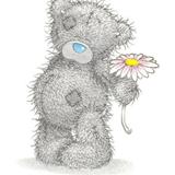 Teddy (67)