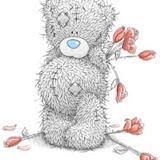 Teddy (73)